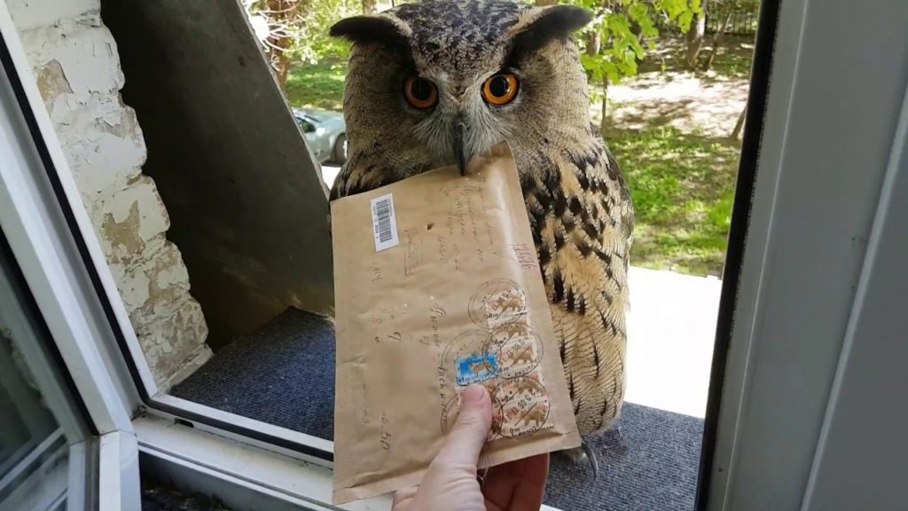 Photo d'un hibou apportant le courrier